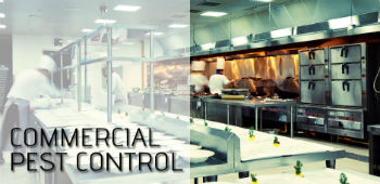 commercial pest control services in mumbai
